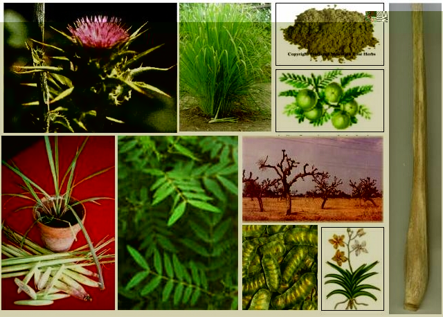 Growers, Processor & Exporters of Indian Herbs  With the success